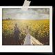 frame_polaroid